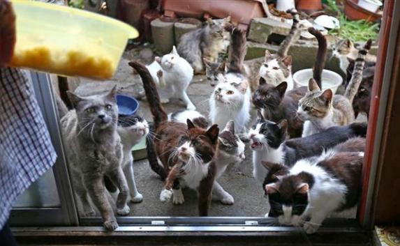 76 котов в квартире и 629 мигрантов на корабле: новости мира (фото, видео)