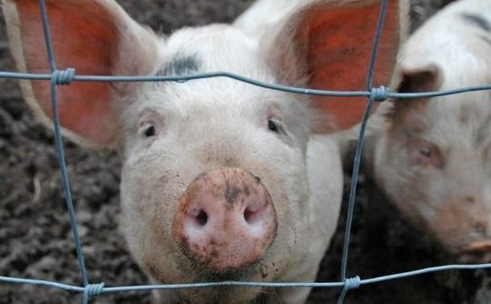 Евросоюз требует у России 1,4 миллиарда евро за «свиное» эмбарго