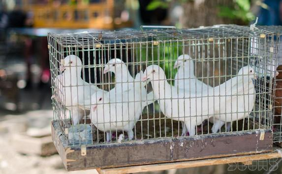 За торговлю и фото с голубями в неустановленных местах оштрафуют